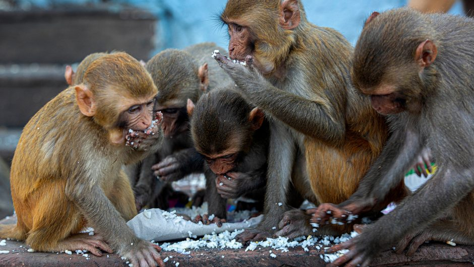 COVID-19 vaccine tests in China protect monkeys: researchers
