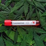 Scientists believe cannabis could help prevent, treat coronavirus