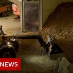 Coronavirus: Potato mountains and rotten cheese – BBC News