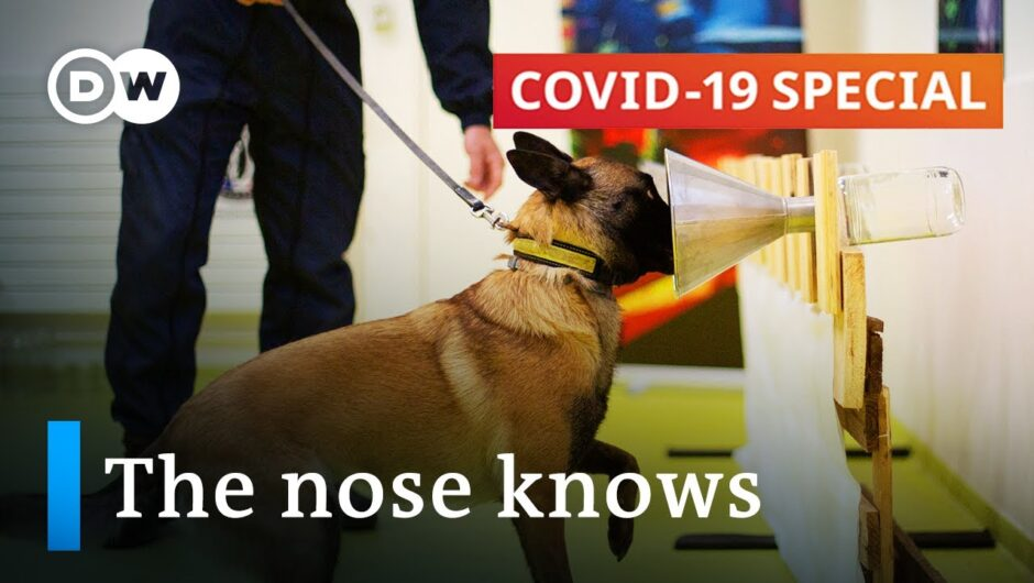 Using dogs to sniff out the coronavirus | COVID-19 Special