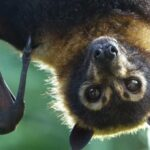 A bat research team investigating coronavirus origins in China reportedly had their samples confiscated
