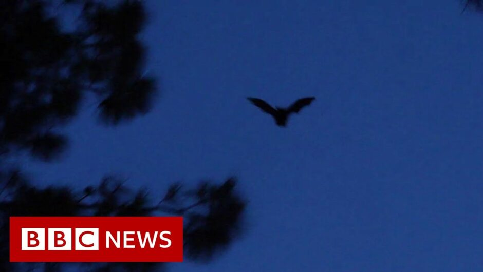 Bats, roadblocks and the origins of coronavirus – BBC News